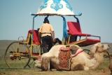 Top Inner Mongolia 2010_14