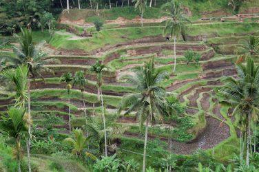 Bali 26